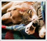 quality in home cat vet care