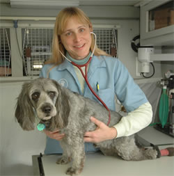 Quality veterinarian care for aging pets