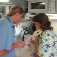 "Dr. Van Horn and Linda with ""Hank"", drawing blood for analysis"